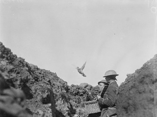 H.M. Pigeon Service. The Bird Leaving the Trench with a Message, May 1917