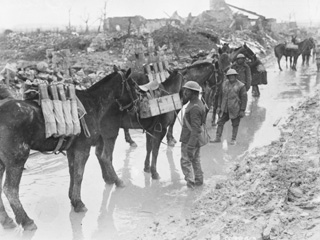 Pack Horses Taking Up Ammunition to Guns of 20th Battery. C. F. A., Neuville St. Vaast, April 1917