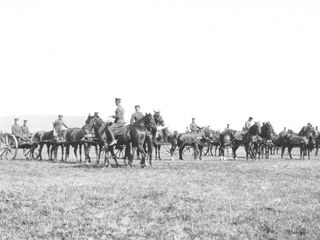 Horse Artillery in Training at Valcartier, Qu�bec, 1914